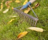 Rusty rake. On green gras Stock Photography