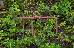 Rusty rake with unwanted plant on the ground. With natural lighting Stock Images