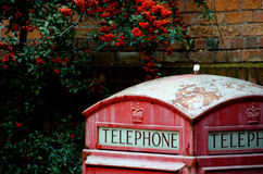 Rusty red phone booth under rowanberry in Victoria Stock Photo