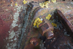 Rusty screw and bolt with lichen Stock Image