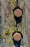 Rusty screws in old wooden plank royalty free stock images