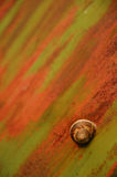 Rusty snail. Snail on a rusty door Stock Images