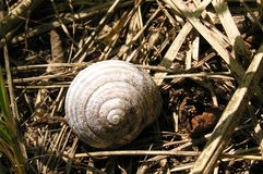 Rusty snail shell Royalty Free Stock Photos