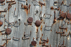 Rusty staples on pinboard Royalty Free Stock Photography