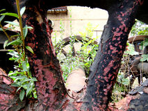 Rusty steam locomotive wheel Royalty Free Stock Photo