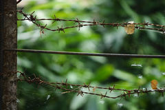 Rusty thorn fence Stock Photography