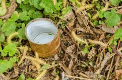Rusty tin in grass Royalty Free Stock Images