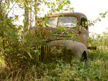 Rusty Truck. Old rusty Truck in overgrown brush and trees Royalty Free Stock Photography