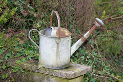 Rusty Watering Can. A Rusty watering Can set on top of a garden wall with green winter foliage around stock photo