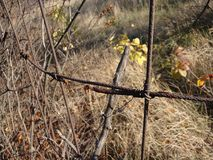 Rusty wire fence on the background stock photo