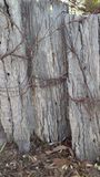 Rusty Wire and Fence Posts royalty free stock photo