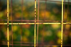 Rusty yellow grid on  green background Royalty Free Stock Photography