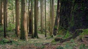 Ruszać się Nad Lasową ścieżką W wieczór zdjęcie wideo