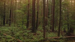 Ruszać się W dół Za drzewem las Przy zmierzchem zdjęcie wideo