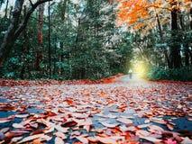 Rusza się naprzód z suchym liściem spadać na mokrej wiejskiej drodze z miękką częścią Zdjęcie Stock