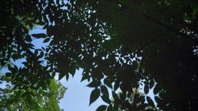 Ruszający się strzał piękny głęboki las z drzewami, niebieskie niebo above, drewna wywodzi się błyszczeć, sunbeams podczas pogodn zbiory