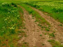 Rut-filled dirt road or path through meadow. Rut-filled dirt road or path leading across a lush, green meadow filled with grass and dandelions Royalty Free Stock Photography