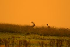 Rut pack with digitally manipulated orange sky Stock Photography