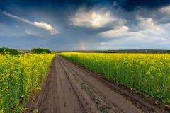 Rut road across rape field before thunderstorm. Scene with rut road across rape field before thunderstorm Royalty Free Stock Photos