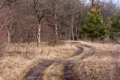 Rut road in forest Royalty Free Stock Image