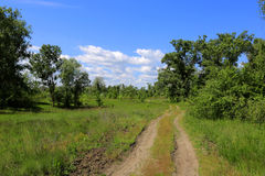 Rut road in forest Royalty Free Stock Photos