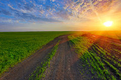 Rut road on green field on sunset Royalty Free Stock Image