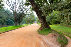 Rut road in park Royalty Free Stock Photo