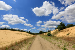 Rut road in sands Stock Images