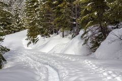 Snowshoe trail and fresh tracks through forest Stock Image