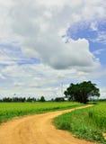 Ruta al campo del arroz Imágenes de archivo libres de regalías