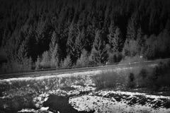 Ruta checa 7 que lleva a Alemania en montaña del mineral del invierno con el stylization blanco y negro ideal Imagenes de archivo