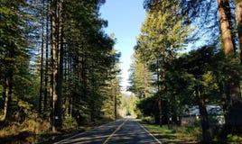 Ruta de los E.E.U.U. de los árboles que conduce el conductor de camión de la forma de vida Foto de archivo