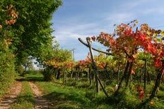 Ruta del viñedo Imagen de archivo libre de regalías