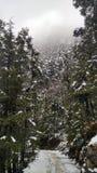 Ruta nevada del senderismo/camisetas y caminos/vegetación coronados de nieve de /Snowcapped del país de las maravillas del invier Imagenes de archivo