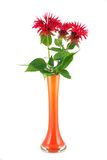 Ruta red bouquet in a vase Royalty Free Stock Images