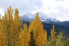 Ruta verde de Icefields en otoño Imagen de archivo libre de regalías