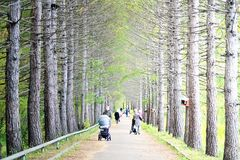 Ruta verde del otoño Fotografía de archivo libre de regalías
