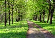 Ruta verde del resorte Foto de archivo