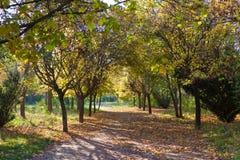 Ruta verde por mañana temprana del otoño fotos de archivo libres de regalías