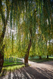 Ruta verde por mañana temprana del otoño foto de archivo libre de regalías