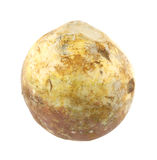 Rutabaga Royalty Free Stock Photo