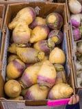 Rutabaga organique Photos stock