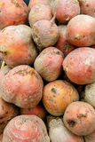 Rutabaga for sale Royalty Free Stock Photo