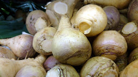 Rutabaga, Swedish turnip, Brassica napus rapifera,. Rutabaga, Swedish turnip, Brassica napus rapifera (Brassica napus napobrassica), root vegetable similar to Royalty Free Stock Photography