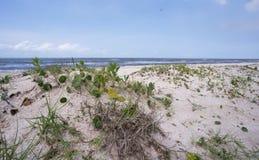 Rutherford Beach, Cameron Parish Louisian Royalty Free Stock Photography