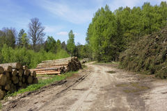 Ruthless deforestation Royalty Free Stock Images