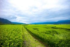Rutt 193 Taiwan Paddy Field Arkivfoto