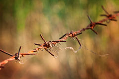Rutted Barbed Wire Stock Photos