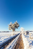 Rutted path covered by ice between snowy fields Stock Photography
