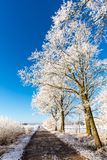 Rutted road next to few frozen trees Stock Photos